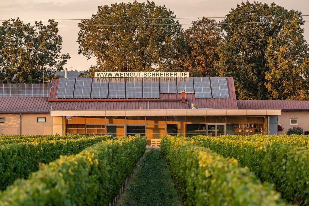 Weingut Schreiber_Vinothek im Weinberg_Moderne Vintothek im Weinberg